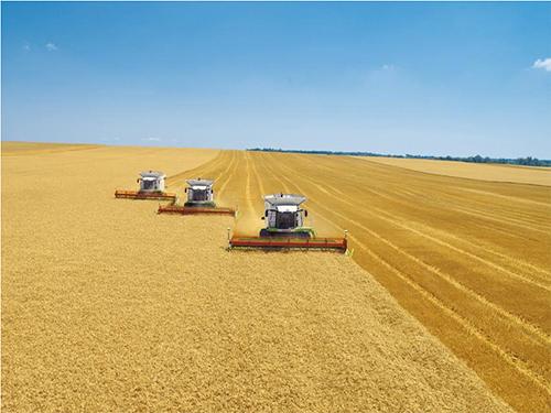 Овес как зерновая культура