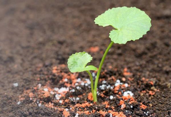 Калийная подкормка растения