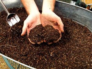 Удобрение почвы спитым чаем