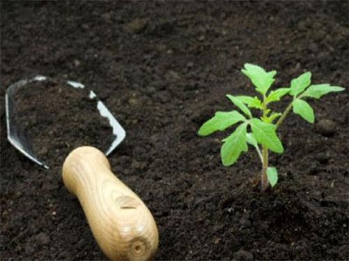 Польза удобрения Идеал для почвы