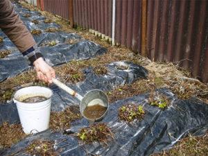 Подкормка растений куриным пометом