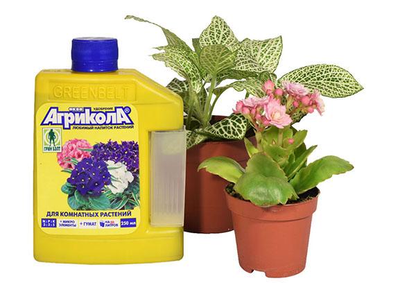 """""""Агрикола"""" для комнатных растений"""