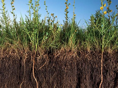 Сидераты - лучшее природное эко-удобрение