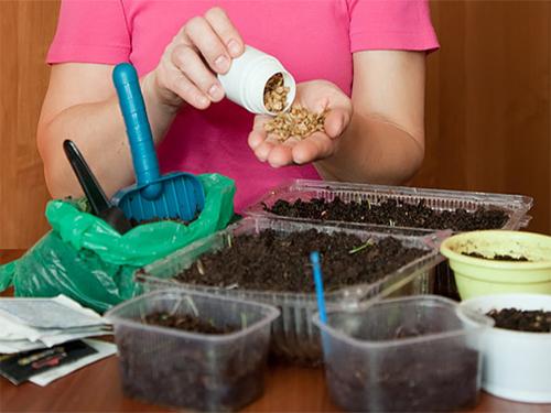 Опилки для проращивания семян