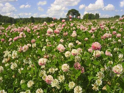 Зависимость урожайности от посева сидератов