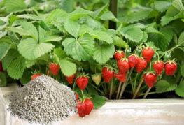 Удобрения КАС для богатого урожая