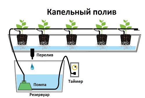 капельный полив в гидропонном выращивании растений