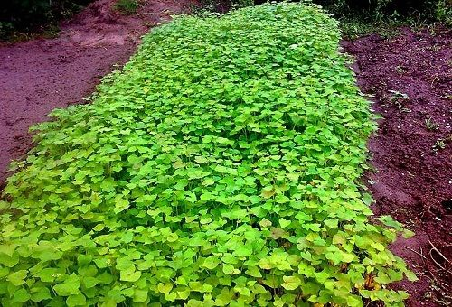 осенние зеленые удобрения