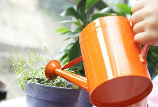Подкормка растения жидким удобрением