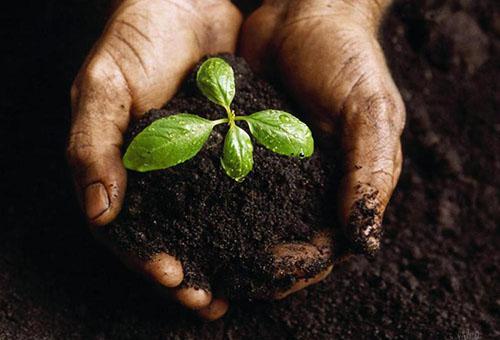 Маленькое растение в грунте