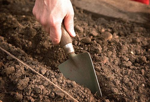 Подготовка почвы для высадки рассады