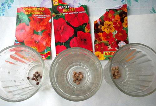 Семена разных видов настурции