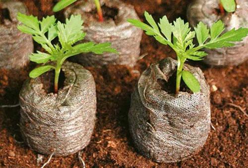 Торфяные таблетки с рассадой