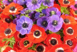 Красные и сиреневые цветки