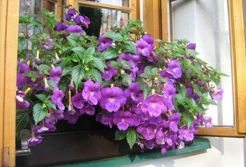 Деокоративные цветы
