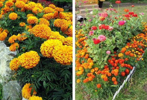 семена цветков для посева