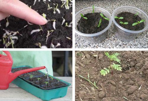Выращивание цветов из семян
