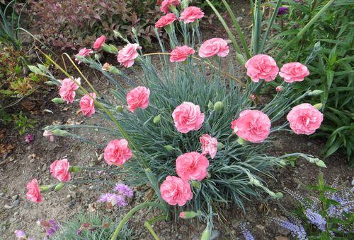 Цветок в открытом грунте