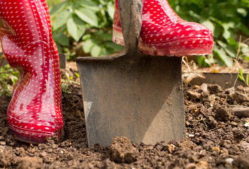 Перекопка почвы для посадки ирги