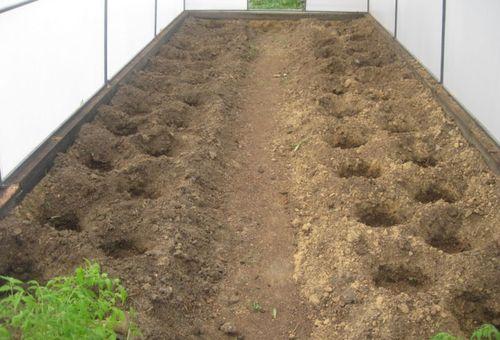 Подготовка земли в парнике