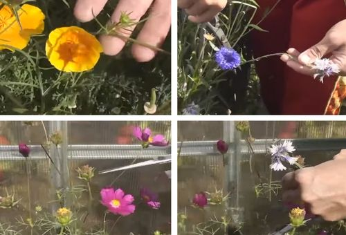 Обрезка сухих цветков