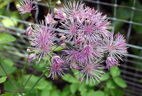 Растение цветок