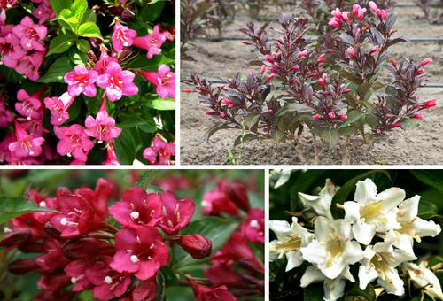 цветы разноцветные