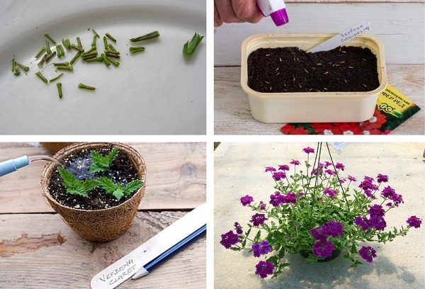 выращивание цветов семенами