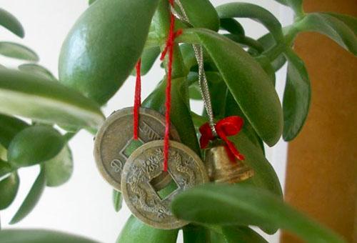 Китайские монеты на денежном дереве