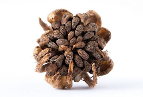 Семена календулы