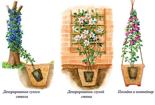 размножение цветка