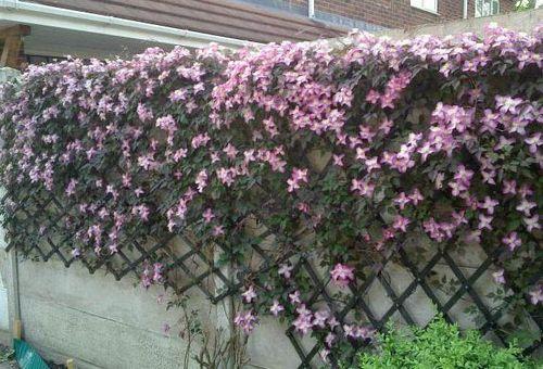 цветки розовые