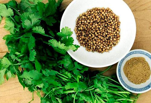 Семена и зелень кинзы