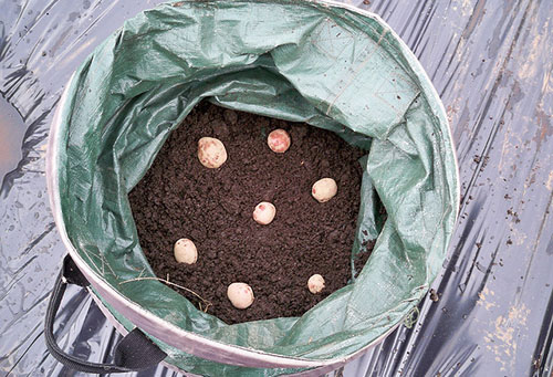 Высадка картофеля в мешок