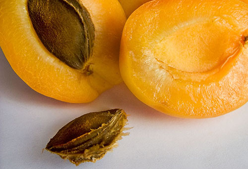 Косточка абрикоса
