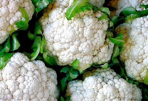 Цветная капуста: выращивание и уход в открытом грунте (фото) – секреты, как сажать рассадой
