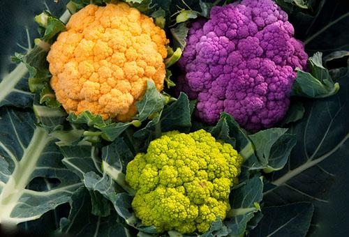 Кочаны цветной капусты разных цветов