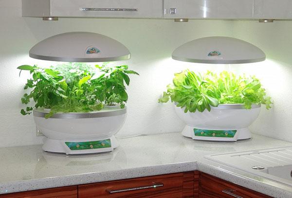 Гидропонные установки на кухне