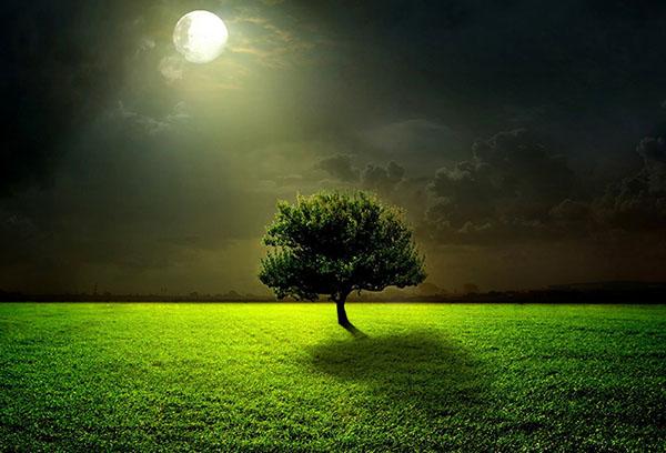 Дерево под луной