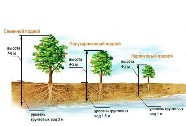 Схема посадки яблоневого сада