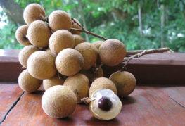 Гроздь плодов лонгана