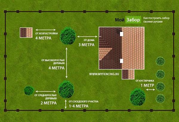 Схема посадки деревьев на участке