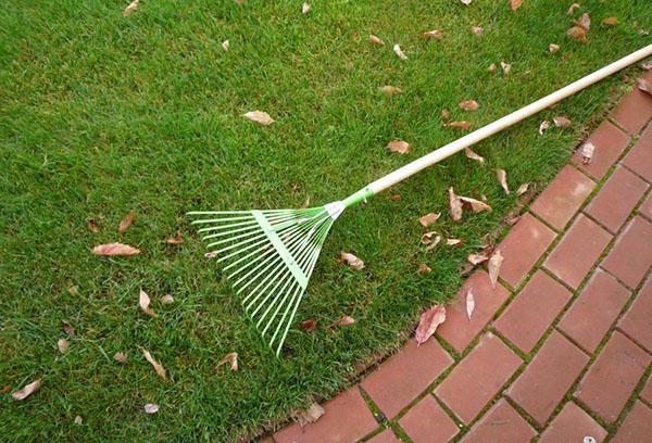 Уборка листьев с газона