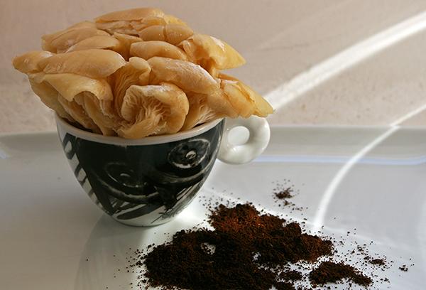 Грибы на кофейной гуще