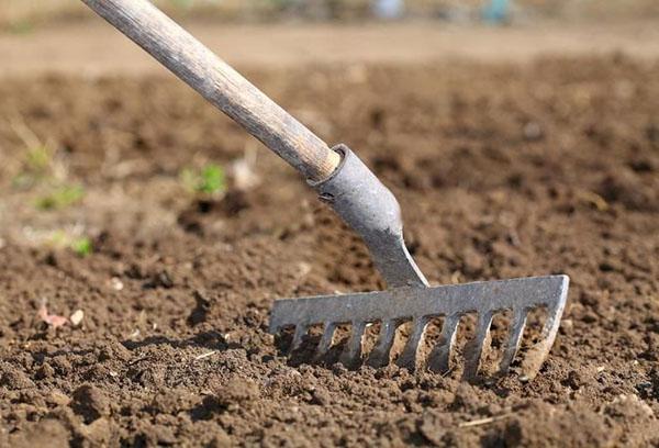 Разравнивание грунта для посева лука