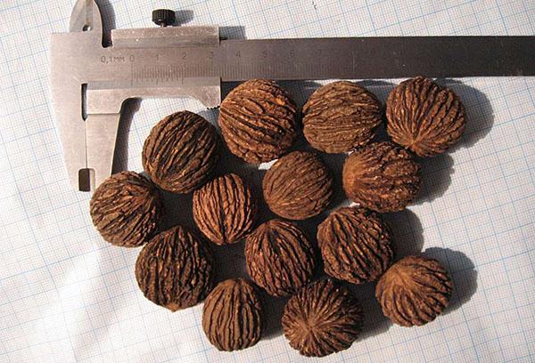 Орехи маньчжурские