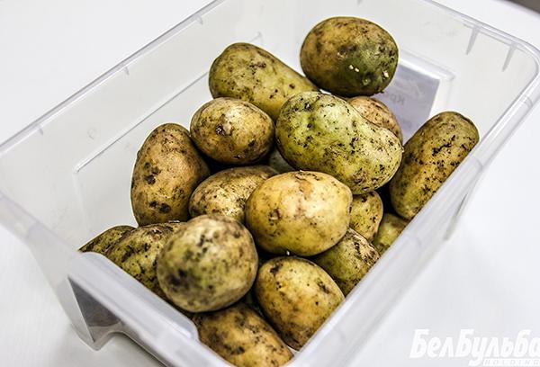 Зеленый картофель для посадки