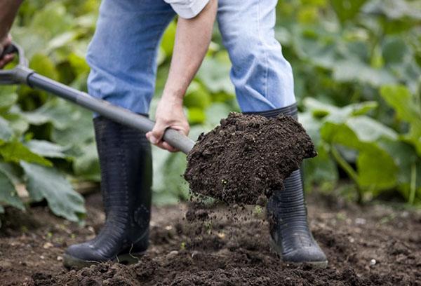 Подготовка почвы для малинника