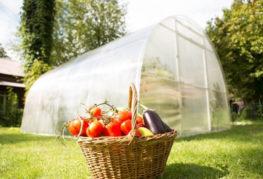 Урожай тепличных овощей