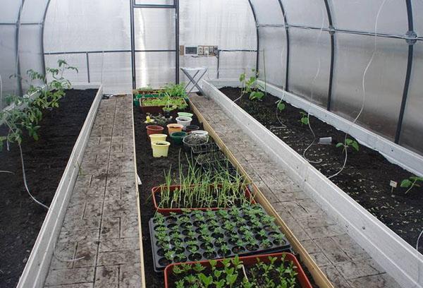 Посадка овощей в теплице